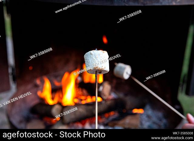Person roasting over fire flames a marshmallows over campfire at night on a summer day, for smores or snack closeup