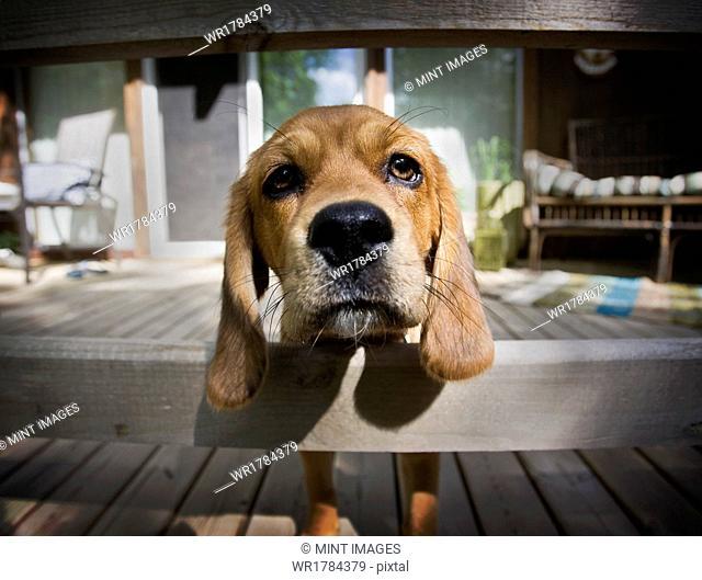 Dog, Saskatchewan, Canada