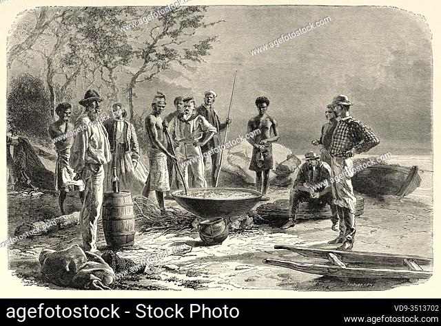 Preparation of a traditional dish, trepang cooking, sea cucumber course, New Caledonia. Old engraving illustration, Journey to New Caledonia by Jules Garnier