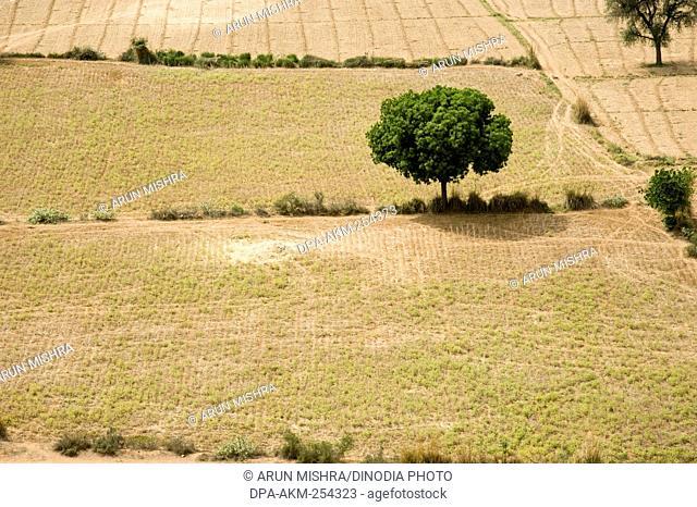 Farming land, barsana, uttar pradesh, india, asia