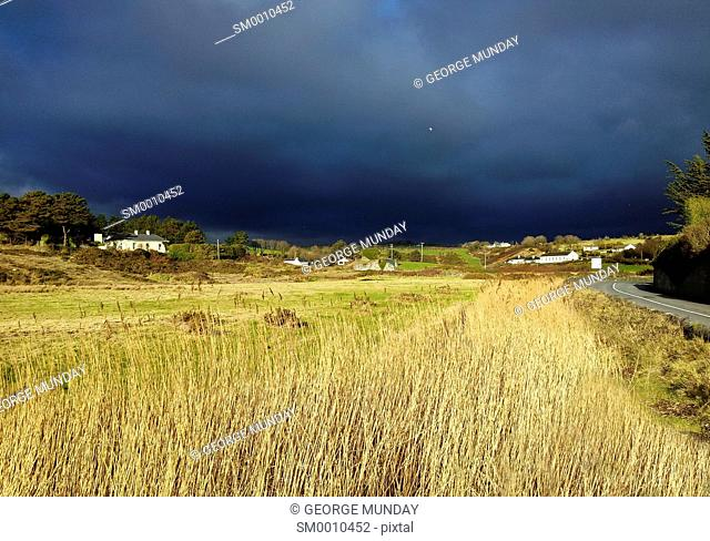 Coast Road lined by Norfolk Reeds, Bunmahon, The Copper Coast, County Waterford, Ireland