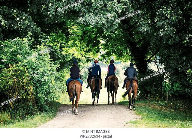 Rear view of four riders on horses riding along a path