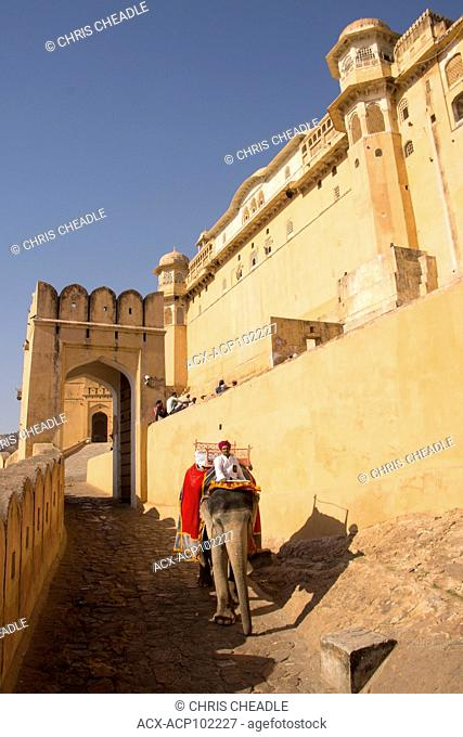 Elephants who carry tourists to Amer Fort , located in Amer, near Jaipur, Rajastan, India