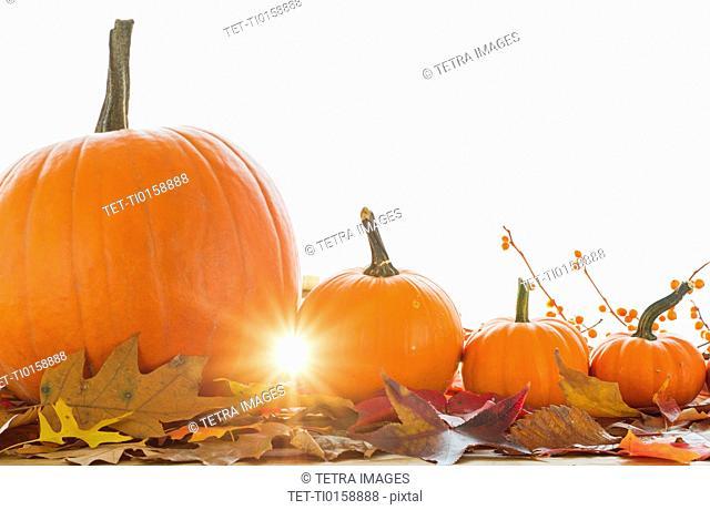 Studio shot of pumpkins and leaves