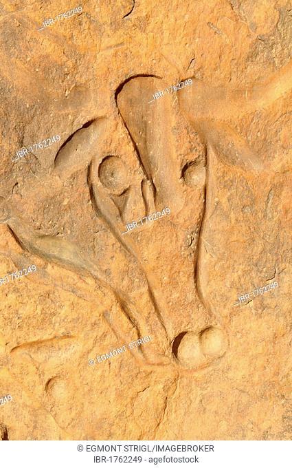 Rock engraving of a crying cow, neolithic rock art near Djanet, Tassili n'Ajjer National Park, Unesco World Heritage Site, Wilaya Illizi, Algeria, Sahara
