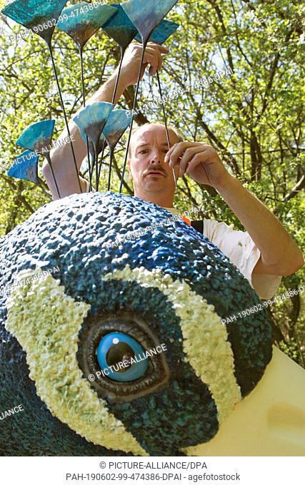 18 May 2019, Saxony, Moritzburg: The gondolier Jens Friebel fastens various peacock feathers to his gondola, a converted Spreewald barge