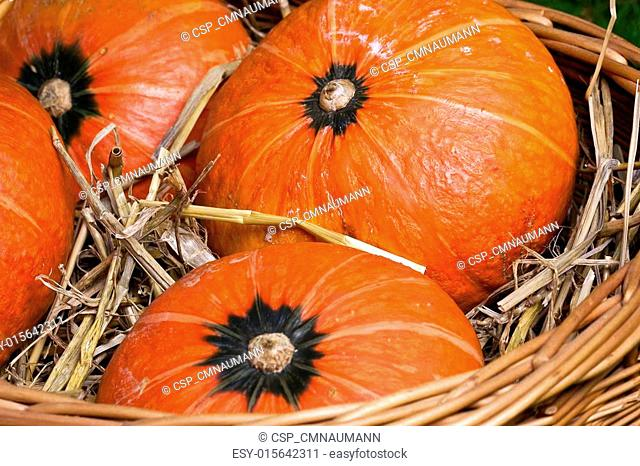 thanksgiving pumpkins with straw in basket