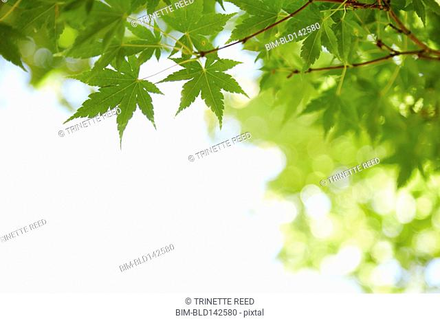 Close up of green leaves on tree
