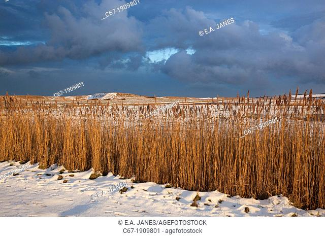 Cley Mill and reedbed in Winter Norfolk