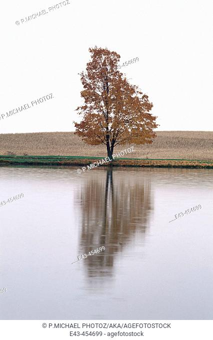 Lake and single tree with reflection in autumn, rusty colored leaves