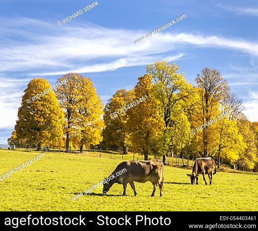 autumn landscape of Dachstein region, Austria