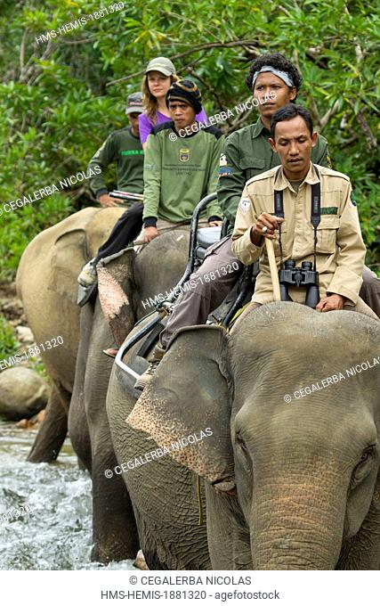 Indonesia, Sumatra Island, Aceh province, Sampoiniet, tourist doing a trek with rangers member of the Conservation Response Unit for the protection of Sumatran...