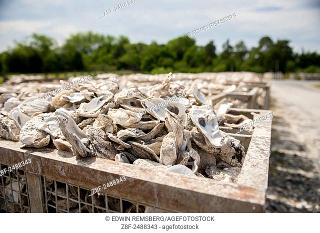 Oyster shells in metal crates in Dorchester county, Maryland, USA