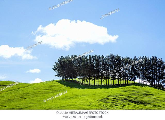 Landscape view near Auckland, New Zealand
