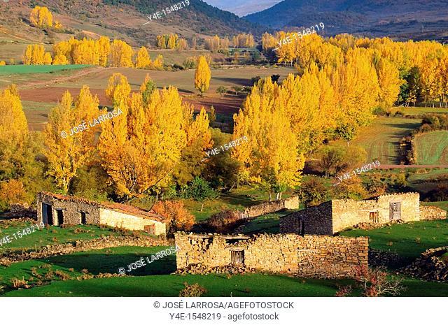Poplars by the river Valdemeca. Cuenca province, Spain