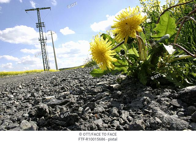 Low angle view of yellow Flowers, flower and tall transmission towers as seen from the stony ground