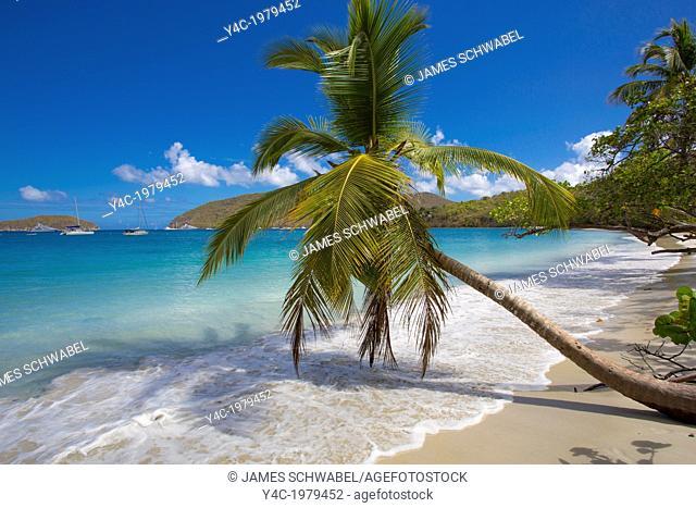 Palm trees on Maho Bay Beach on the Caribbean Island of St John in the US Virgin Islands