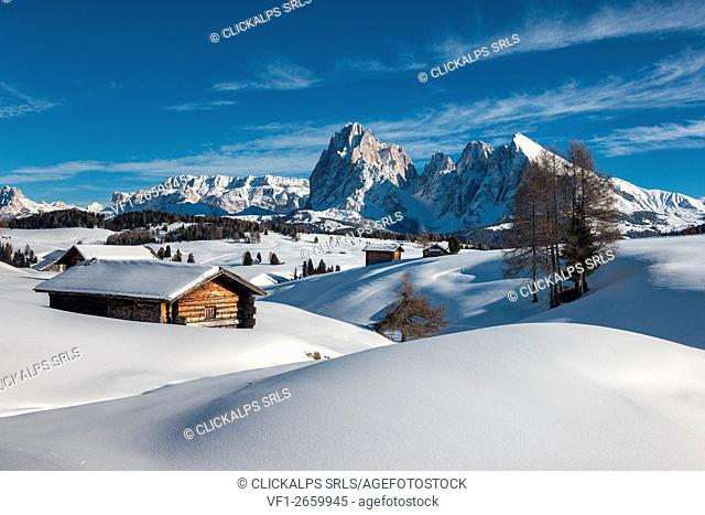 Alpe di Siusi/Seiser Alm, Dolomites, South Tyrol, Italy. Winter landscape on the Alpe di Siusi/Seiser Alm. In the background the peaks of Sella