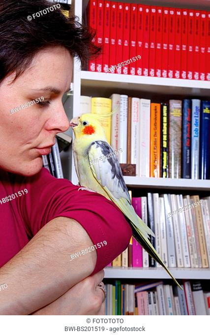 cockatiel (Nymphicus hollandicus), woman caressing a cockatiel on her arm, standing in front of a bookshelf