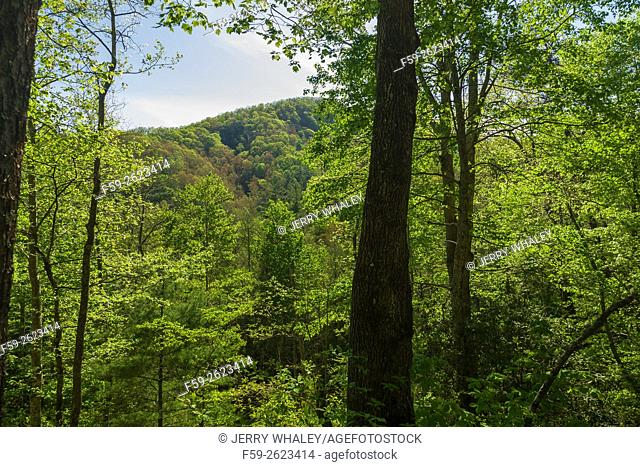 Spring, from Foothills Parkway, TN