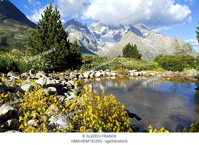 France, Hautes Alpes, Lautaret Alpine Botanical Garden, Meije Massif in the background