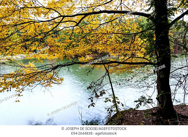 Autumn color in a deciduous forest with a pond in the background, Alabama, USA