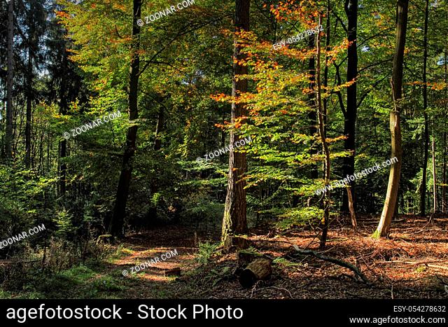 Herbststimmung im Wald, Autumn atmosphere in the forest