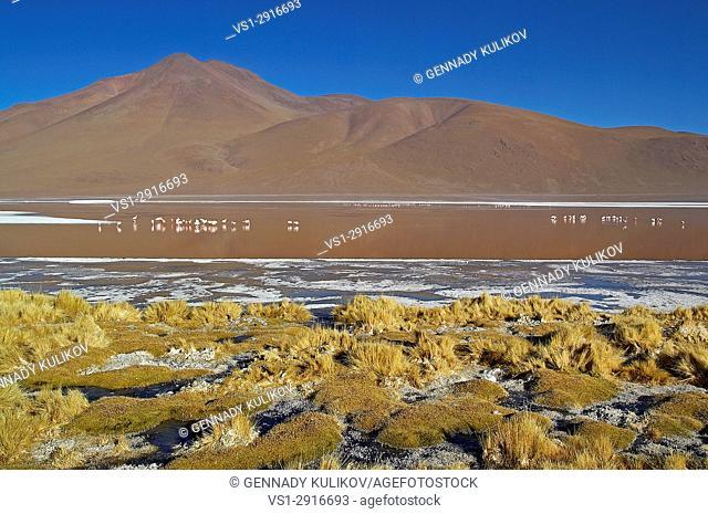 Flamingos at Laguna Colorada (Red Lake, altittude 4278m) in Bolivian altiplano, within Eduardo Avaroa Andean Fauna National Reserve