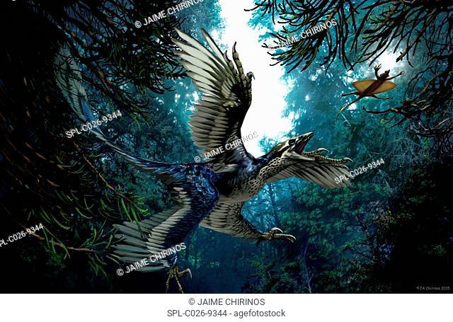Microraptor, artwork