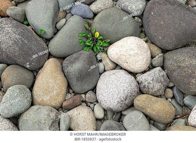 Pebbles on the shore of Lake Te Anau, Fiordland National Park, South Island, New Zealand