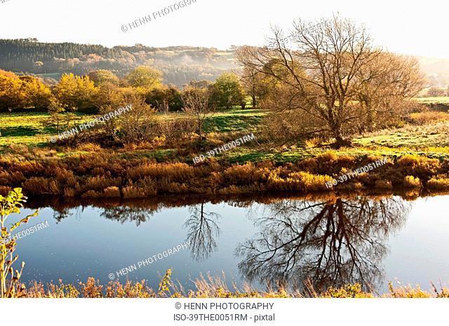 Trees reflected in still creek