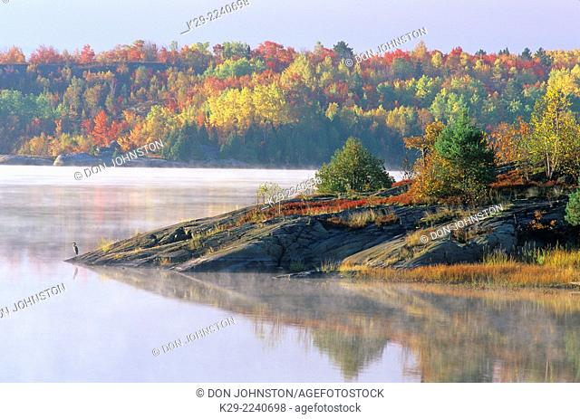 Rocky point with blue heron and autumn colour on the Vermilion River, Greater Sudbury, Ontario, Canada