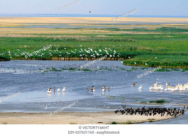 General aerial view of Manych lake in Kalmykia, Russia. A lot of birds