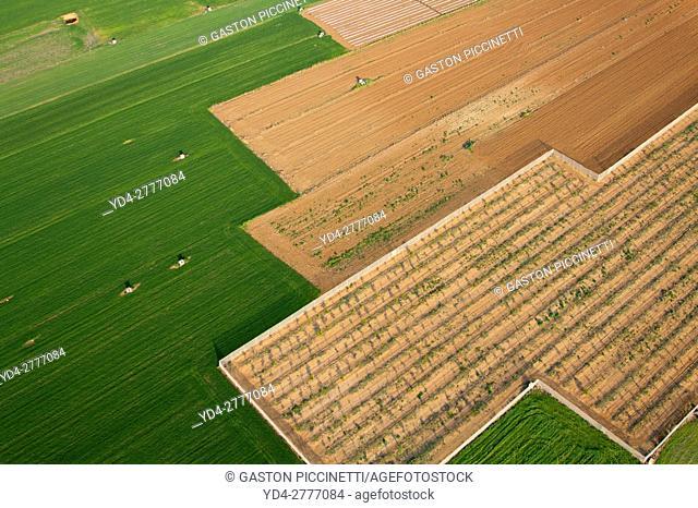 Aerial view of farm fields, Mallorca field, Balearic Islands, Spain