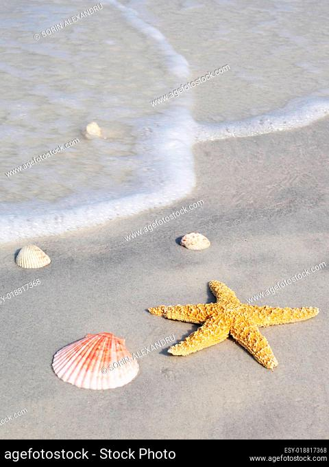 Starfish and shells with surf approaching