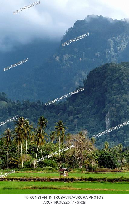 Beautiful natural landscape with palm trees and mountains, Banda Aceh, Sumatra, Indonesia