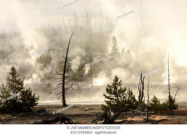 Remains of trees stands amid steaming pools in Norris Geyser Basin, Yellowstone National Park