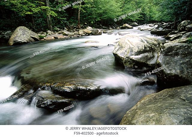 Little Pigeon River, Spring. Greenbrier, Great Smoky Mountains National Park. Tennessee, USA