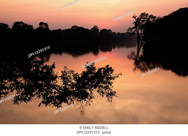 Angkor Wat, sunset with tree branch over water that surrounds complex; Siem Reap, Cambodia