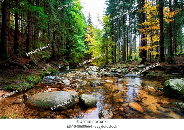 Forest stream in autumn scenery of the mountains, Karkonosze National Park, Poland