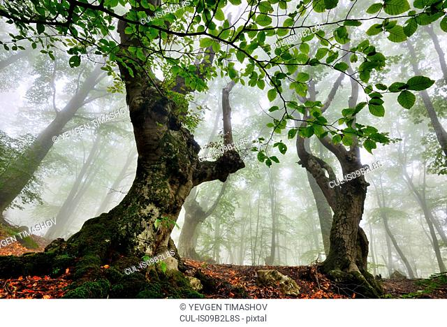 Low angle view of misty forest, Crimea, Ukraine