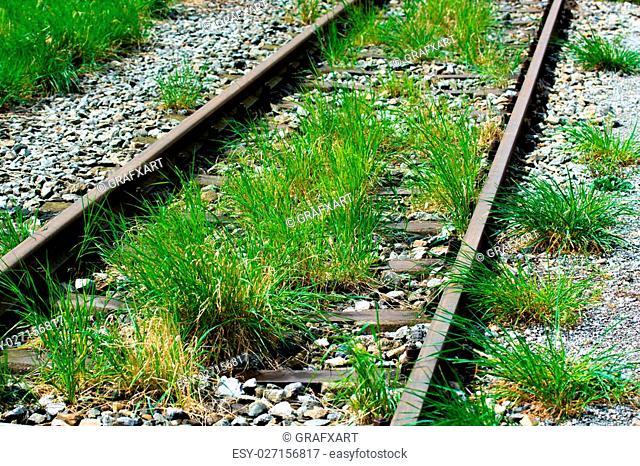 Rail Tracks With Grass
