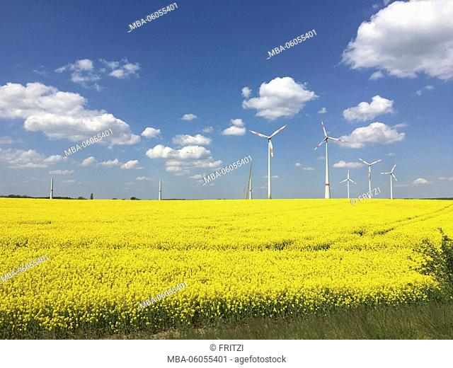 Rape field, landscape, nature, field, Brandenburg, Germany, heaven