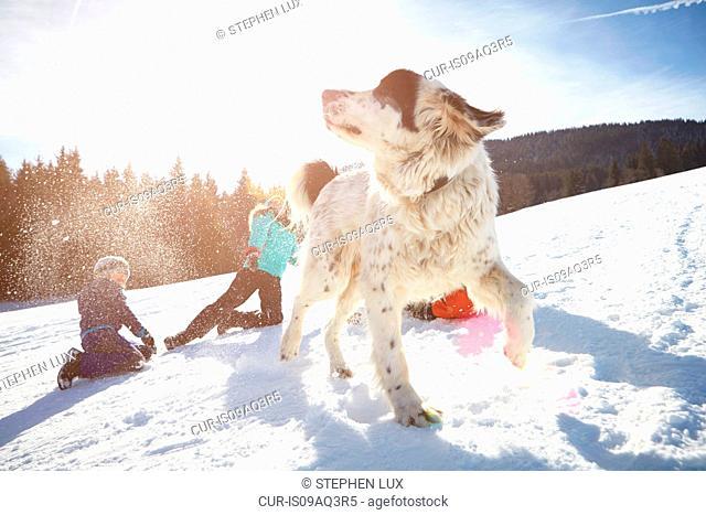 Children and pet dog enjoying playing in snow
