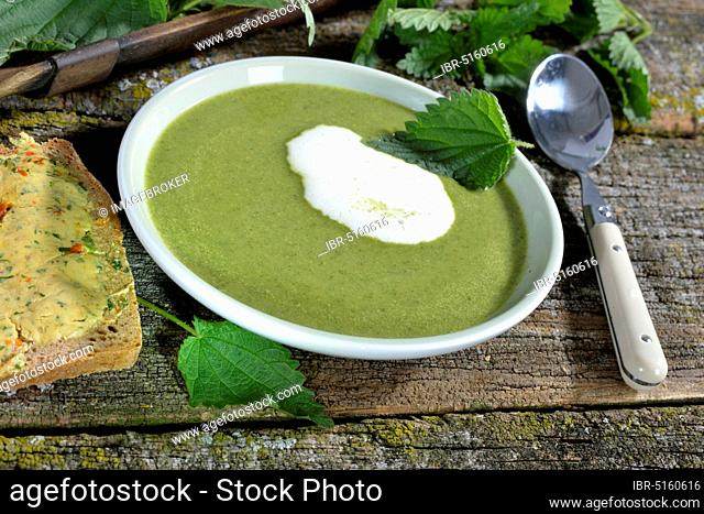 Nettle soup (Urtica dioica)