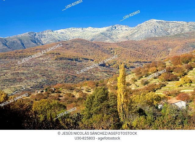 Autumn Landscape with the Sierra de Béjar the background Farms with cherry Jerte Valley, Sierra de Gredos in the province of Cáceres, Extremadura, Spain, Europe