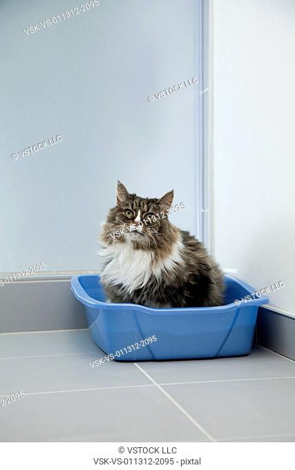 USA, Illinois, Metamora, Cat leaving container
