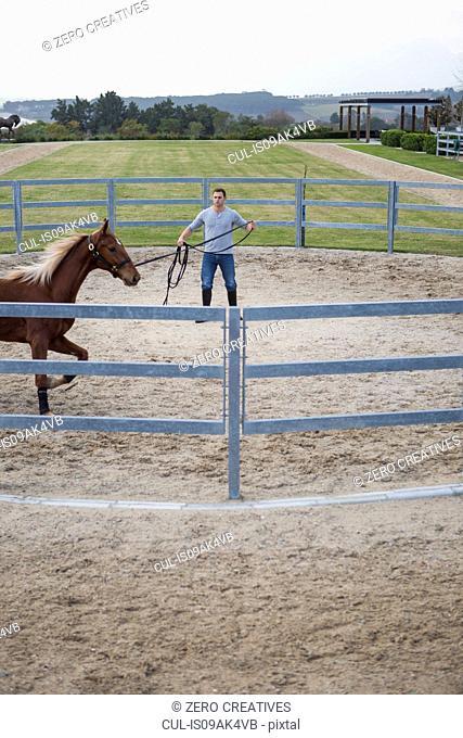 Male stablehand exercising palomino horse around paddock ring