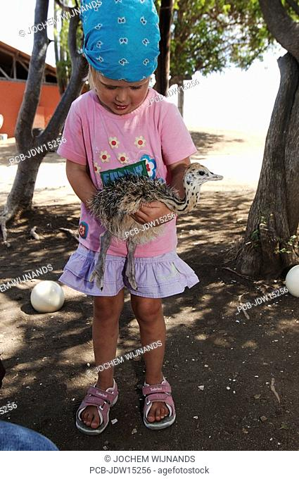 Netherlands Antilles, Curacao, ostrich farm, a toddler holding an ostrich chicken
