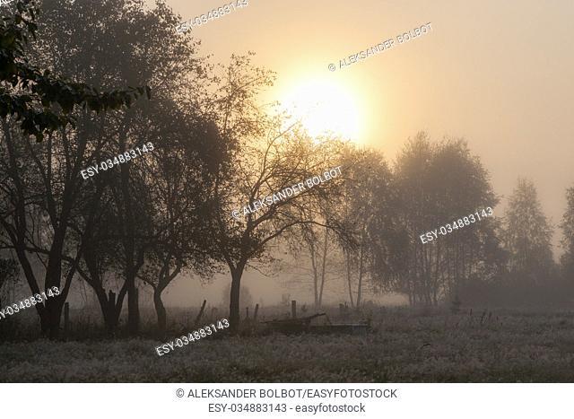 Old garden trees in misty morning with sun rising, Podlasie Region, Poland, Europe